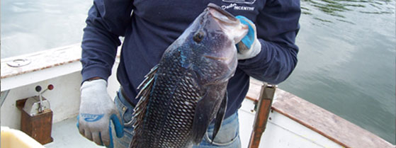 Islander sportfishing charters sea kii www for Fishing charters falmouth ma